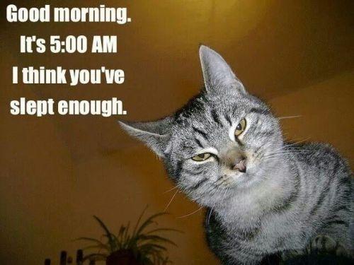 cat_good_morning_cats_pinterest