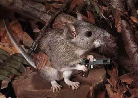 mousegun_zpsad542c28